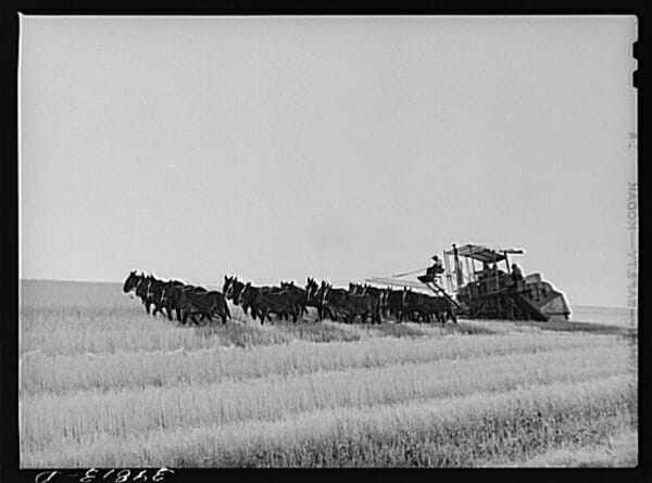 Wheat combine pulled by 20 mules, Walla Walla, Washington.