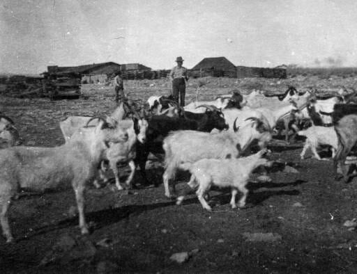 Pueblo Livestock