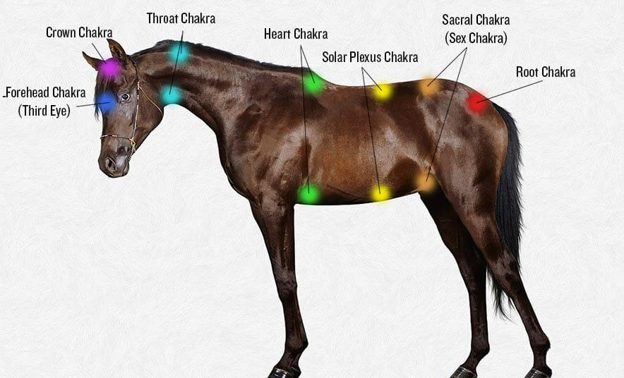 All Hands on a Horse Body | Modern Farmer
