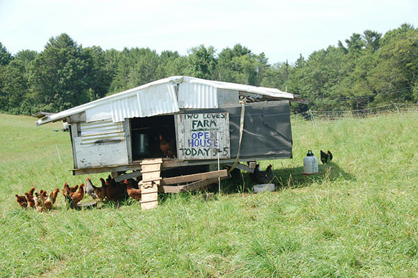 Chicken coop at Two Coves Farm -- MOFGA-certified -- in Harpswell, ME