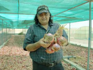 Abu Dhabi onion farmer.