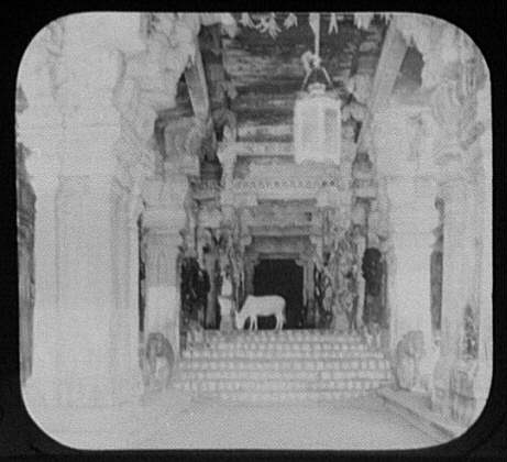 Cow grazing in the hall of a thousand colums temple of siv