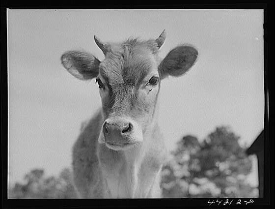 Greene County Georgia 1942