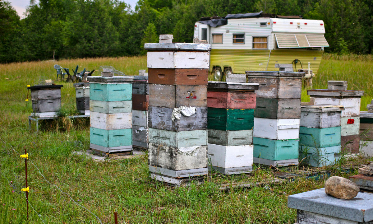 One of three hive clusters on Ian Critchell's farm, beyond that is the trailer where he breeds and hatches his queens, and also where two were stolen.