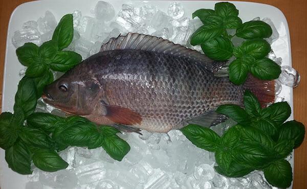 fish-thing