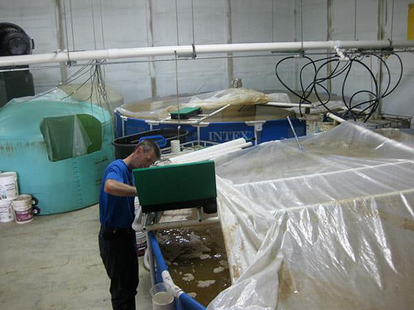 Steiner tending to his shrimp tanks.