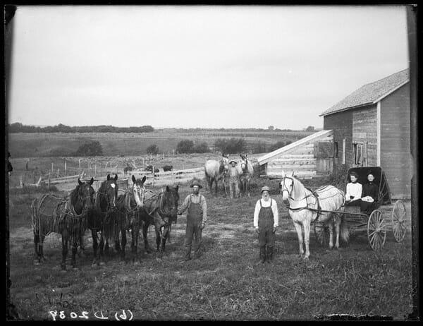 Horses 13