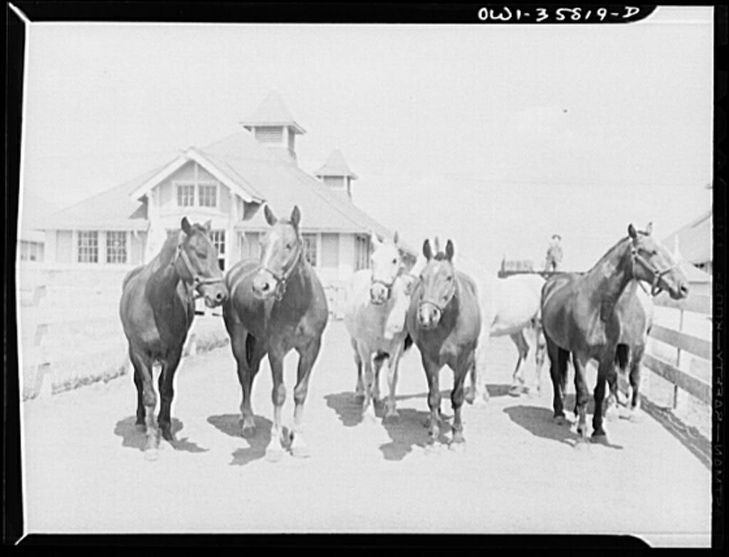 Horses2-