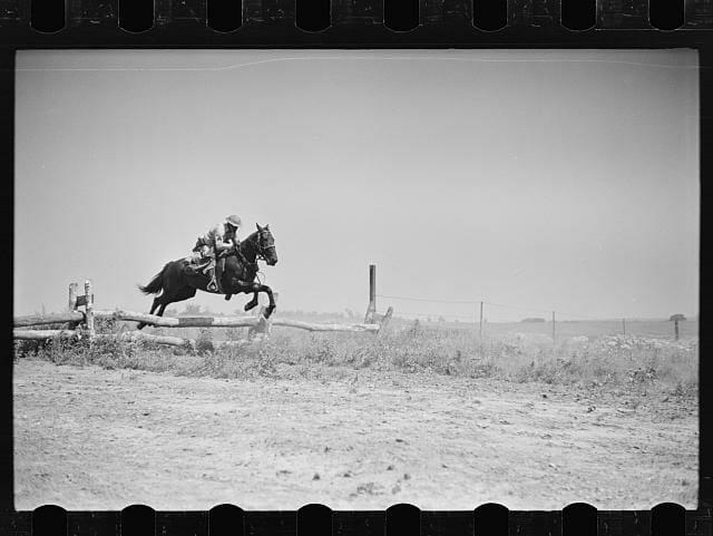 Horses22