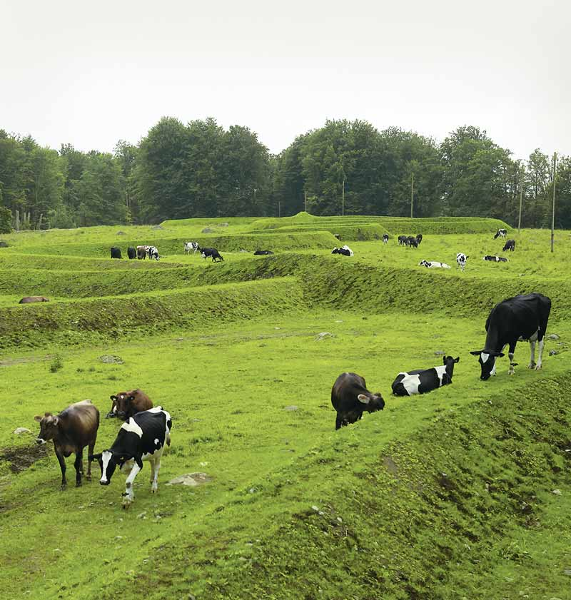 Bovine art lovers take in Maya Lin's Wanas work. / Anders Norrsell