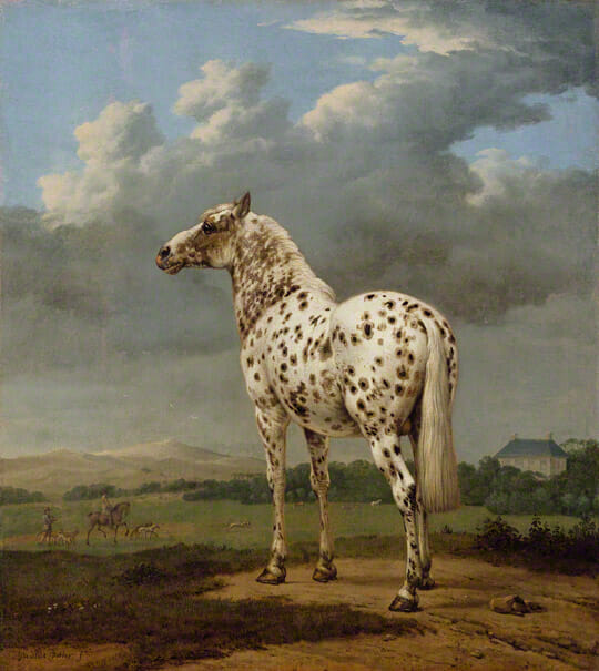 Piebald Horse, Paulus Potter 1650-654. Oil on canvas. 19 1:2 x 17 11:16 in. The J. Paul Getty Museum.