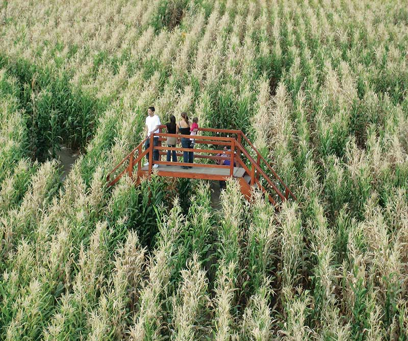 Maze fans get a better vantage point in Wellington, CO in one of Herbt's creations. / themaize.com