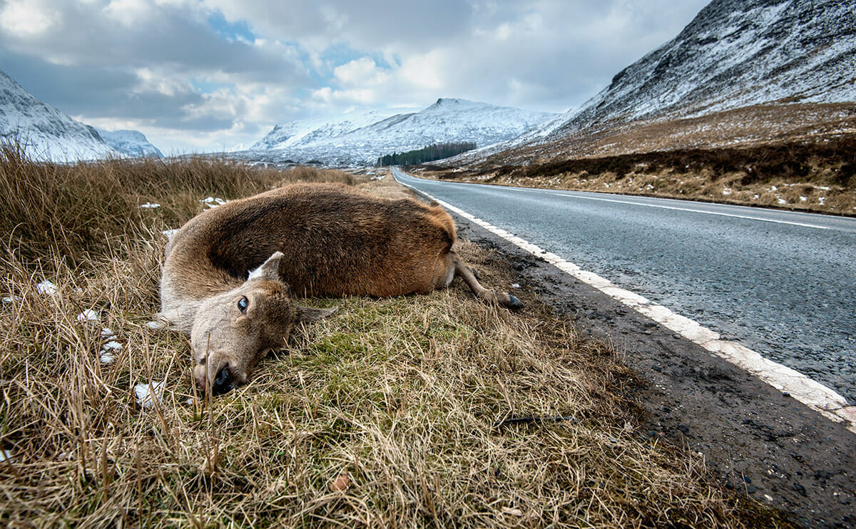 On Eating Roadkill, the Most Ethical Meat - Modern Farmer