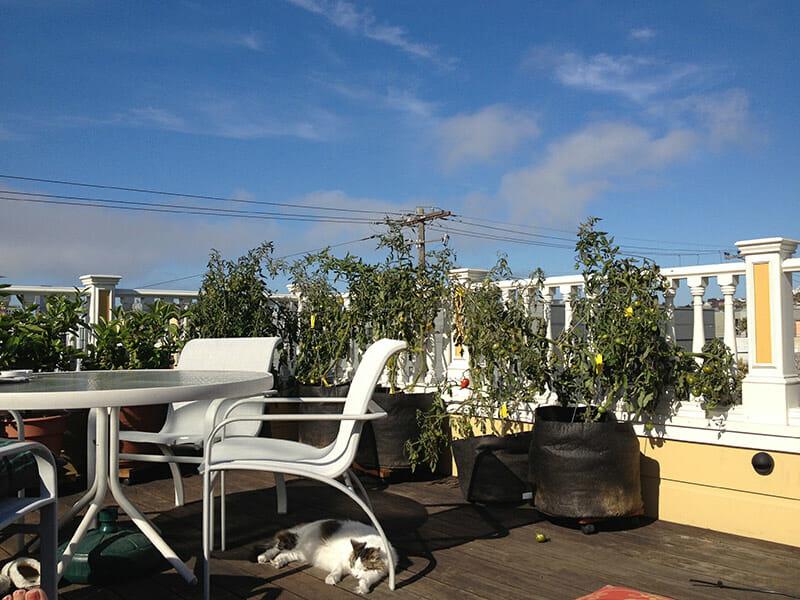 sf-rooftop
