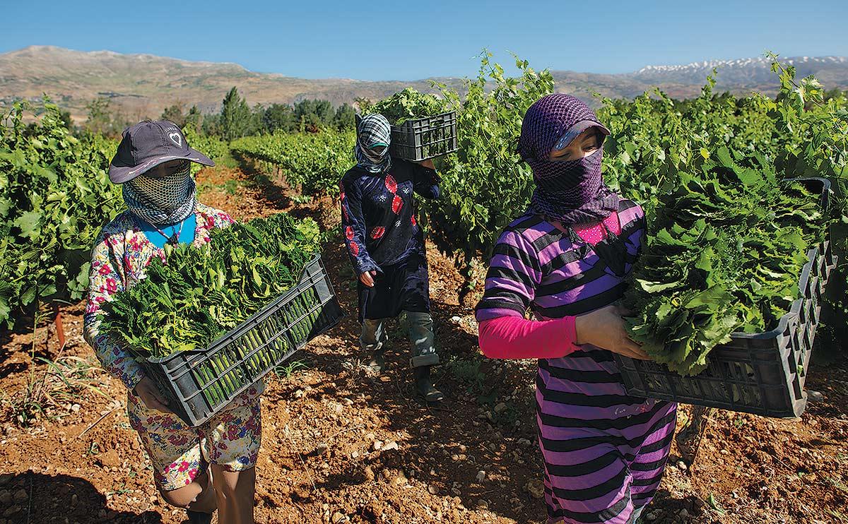 Fleeing Syria To Farm Modern Farmer