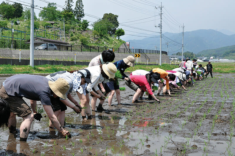 Students try rice planting in Kawaba, Gunma
