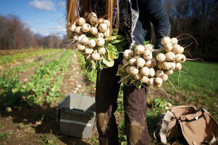 Student Tess Morningstar picks fall turnips