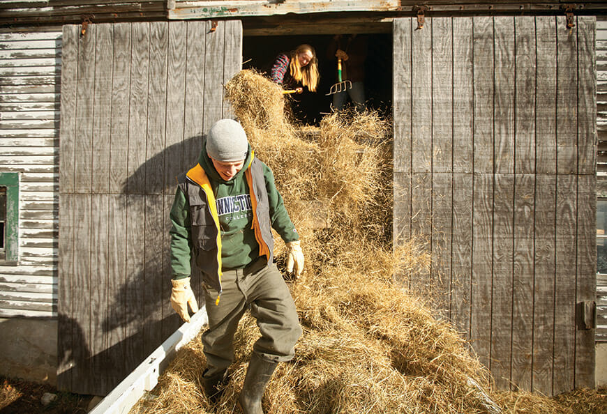 Andrew Harrington collects loose hay; Sarah Habeck milks Patience the cow.