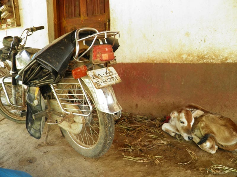 Rama Krishna's Honda motorcycle, which he rode to a neighbor's field to hang himself from a tamarind tree. The cow is a gift from the elder sister of Shanthamma, Krishna's widow, so her children would have milk to drink.