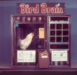 A birdbrain unit  manufactured by Animal Behavior Enterprises on display at the Smithsonian institute. Photo courtesy of Sophia Yin.