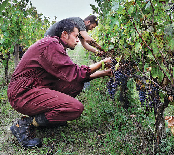 At San Patrignano, residents are served wine with meals  -  drinking wine is an integral part of the Italian culture, and not an issue with the majority of residents  -  here, two residents work in the vineyard, picking grapes.
