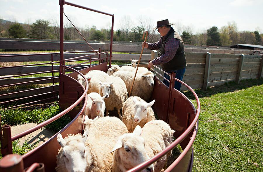 10 Things I've Learned From Lambs - Modern Farmer