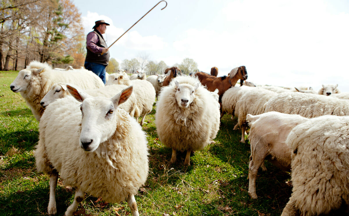 Jack Graham on Why We Still Need a Shepherd in These Modern Times