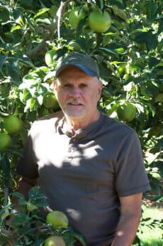 Pelger in a California apple orchard