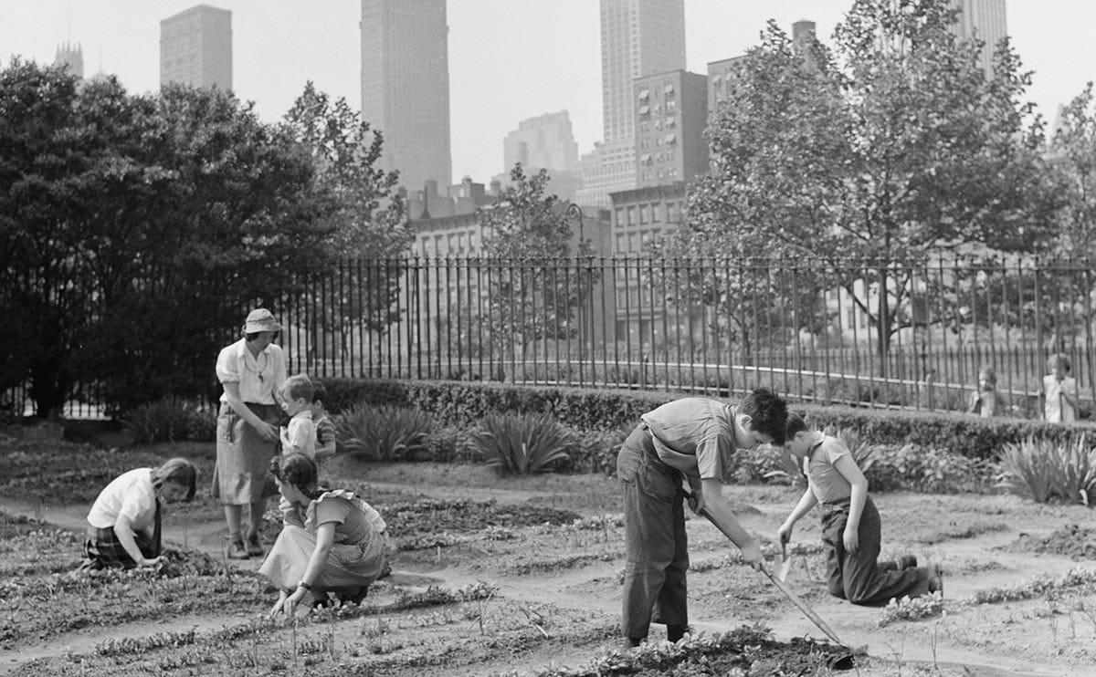 15 Vintage Victory Garden Pics - Modern Farmer