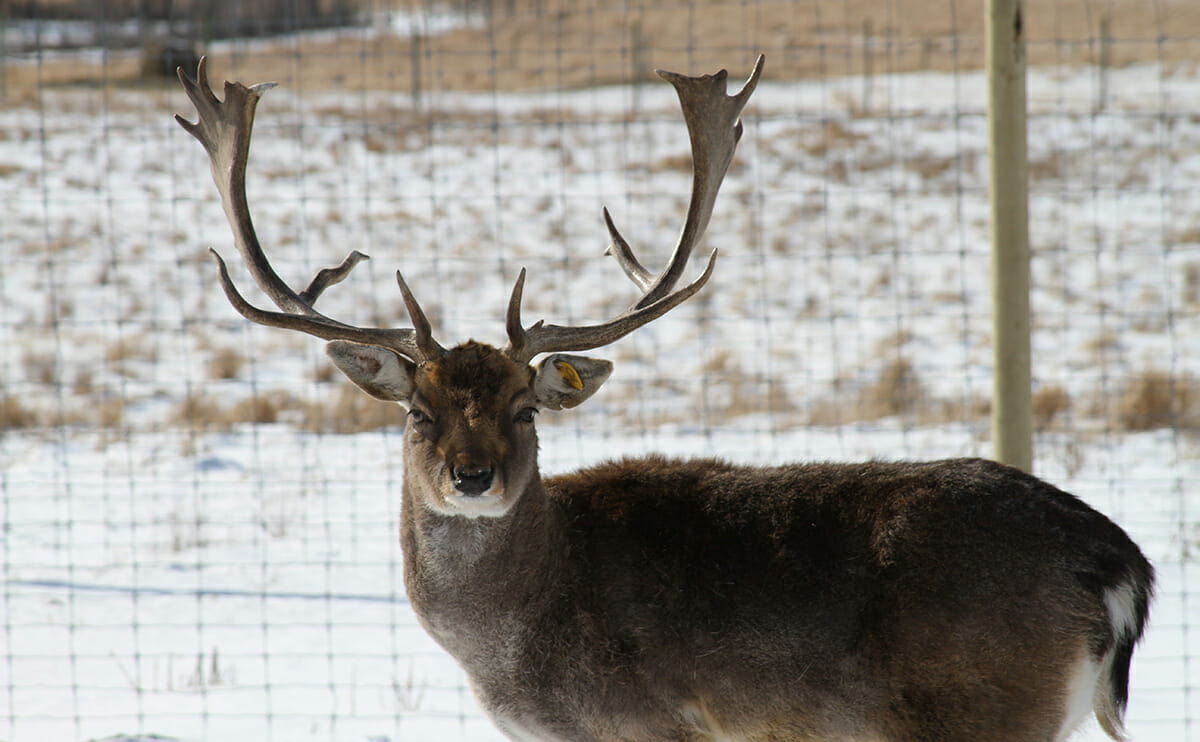 Deer Farming: The Next Adventure in Agriculture - Modern Farmer