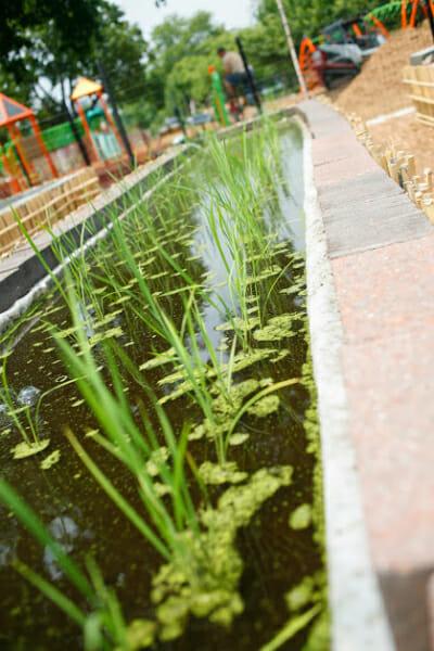 Freshly transplanted seedlings