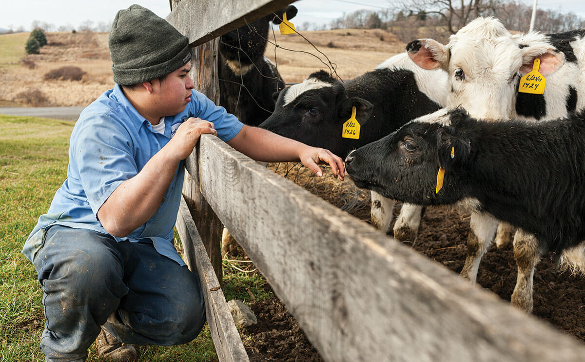 A farmhand spends a moment with the calves after they have been cleaned and fed. The calves are quarantined in their own area and moved from various pens as they get older. The animals' birthdays and mothers' names are recorded on yellow ID tags, which are put on calves soon after birth and stay on their entire lives.