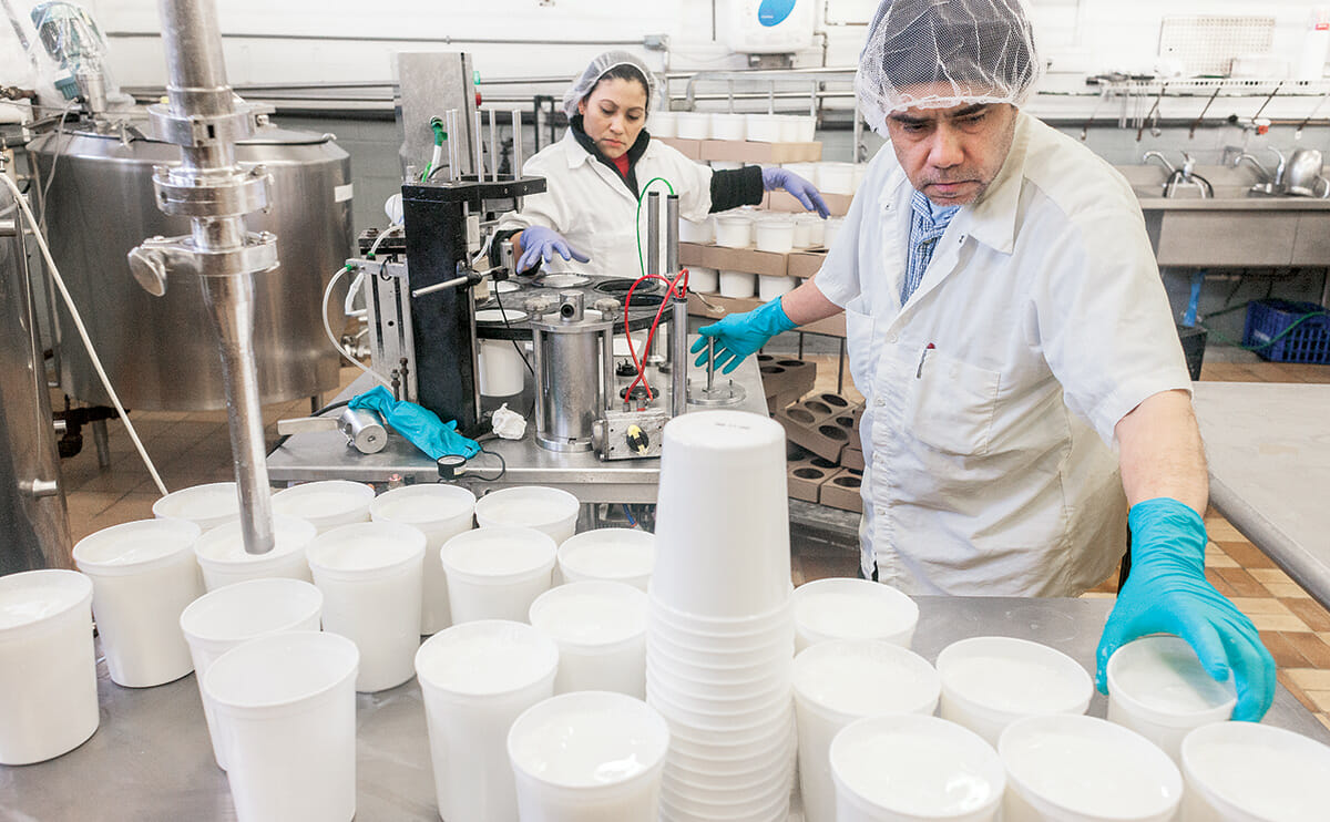 Workers prepare the milk and yogurt culture solution for placement in a large incubator.