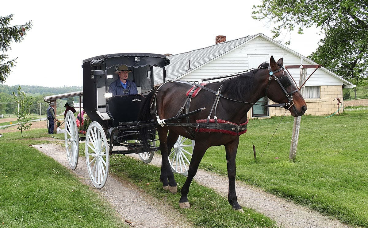 Driving the horse and buggy through the property.