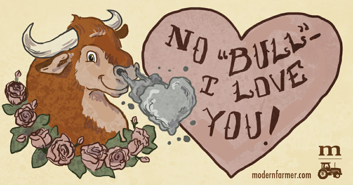 No Bull, I Love You