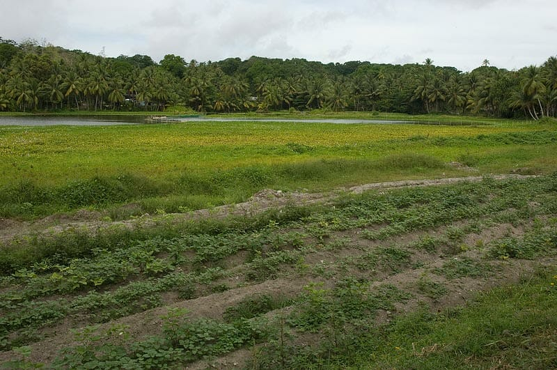 A vegetable patch grows in Buada Lagoon. (Lorrie Graham / CC 2.0)