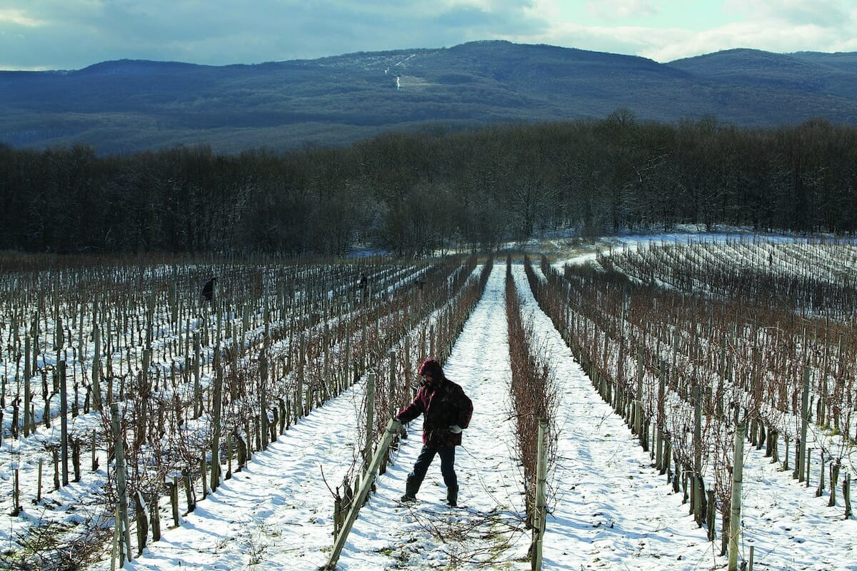 More workers tend to the winery's neat rows.