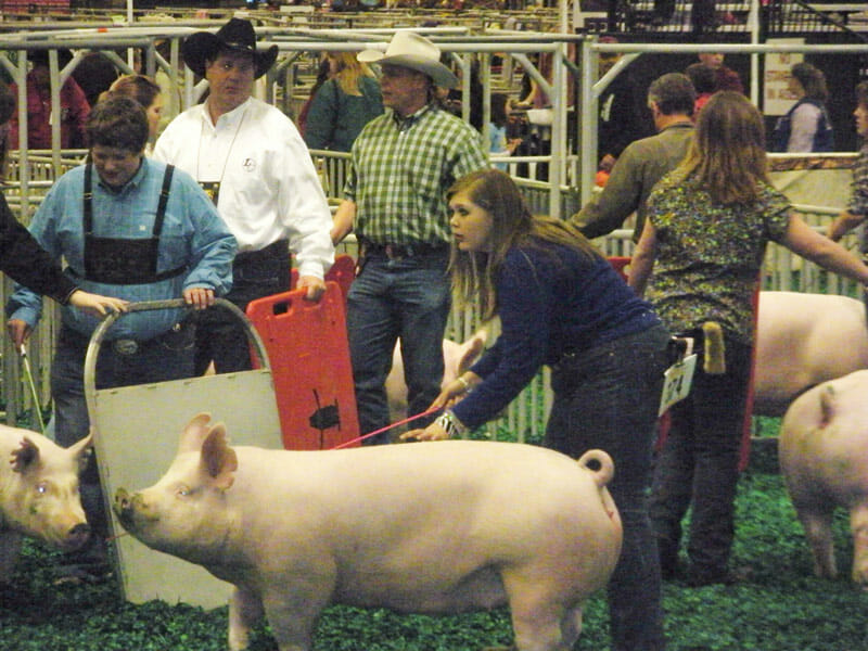 Ashley Pasqua and her pig in the show ring.
