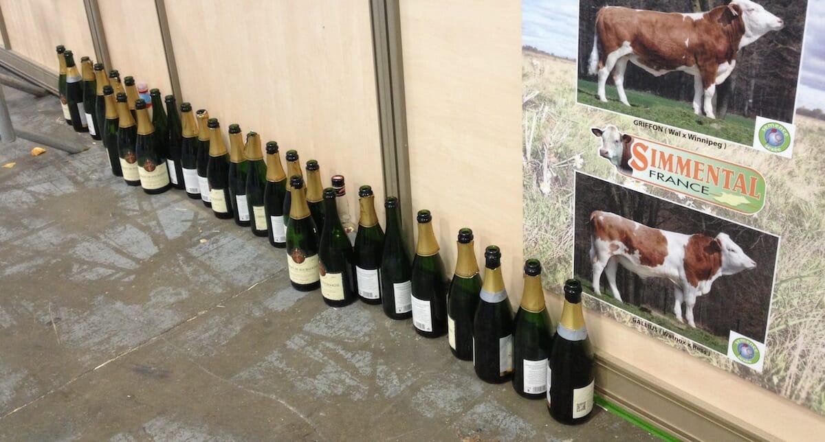 wine-cows