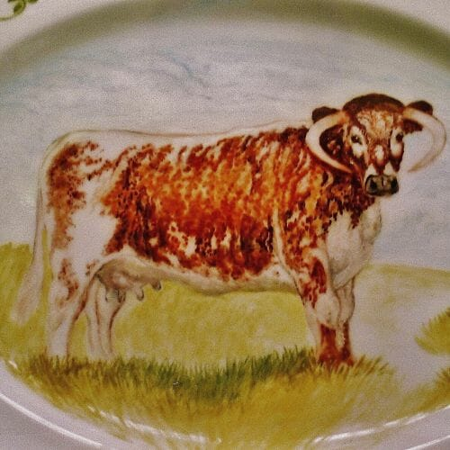 An English Longhorn by Margaret Taylor