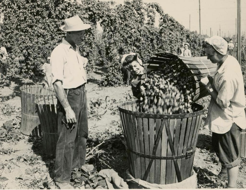 Orren Goff, check boss, watches Janiece Gerhard, 15, and Jorene Johnson, 17, dump a basket of hops into a hopper in preparation for sacking and weighing, 1946. From the Extension and Experiment Station Communications Photograph Collection.
