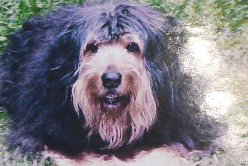 The Briard dog, Britty, who got Patty Kruthers into spinning dog hair / Curtesy Patty Kruthers