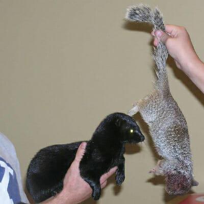 Missy's first rock squirrel.