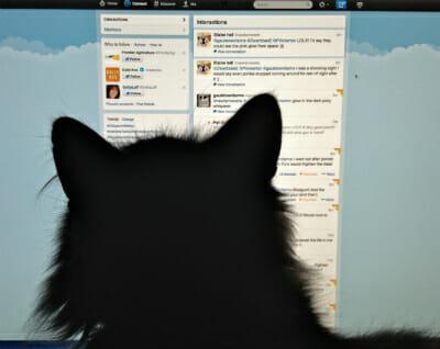 The Cat Shepherd checks Twitter