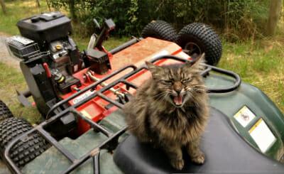 Cat Shepherd says: 'Ride or die!'