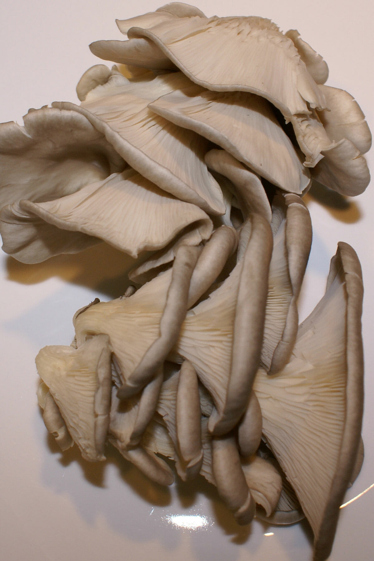 Oyster mushrooms are referred to as exotics.