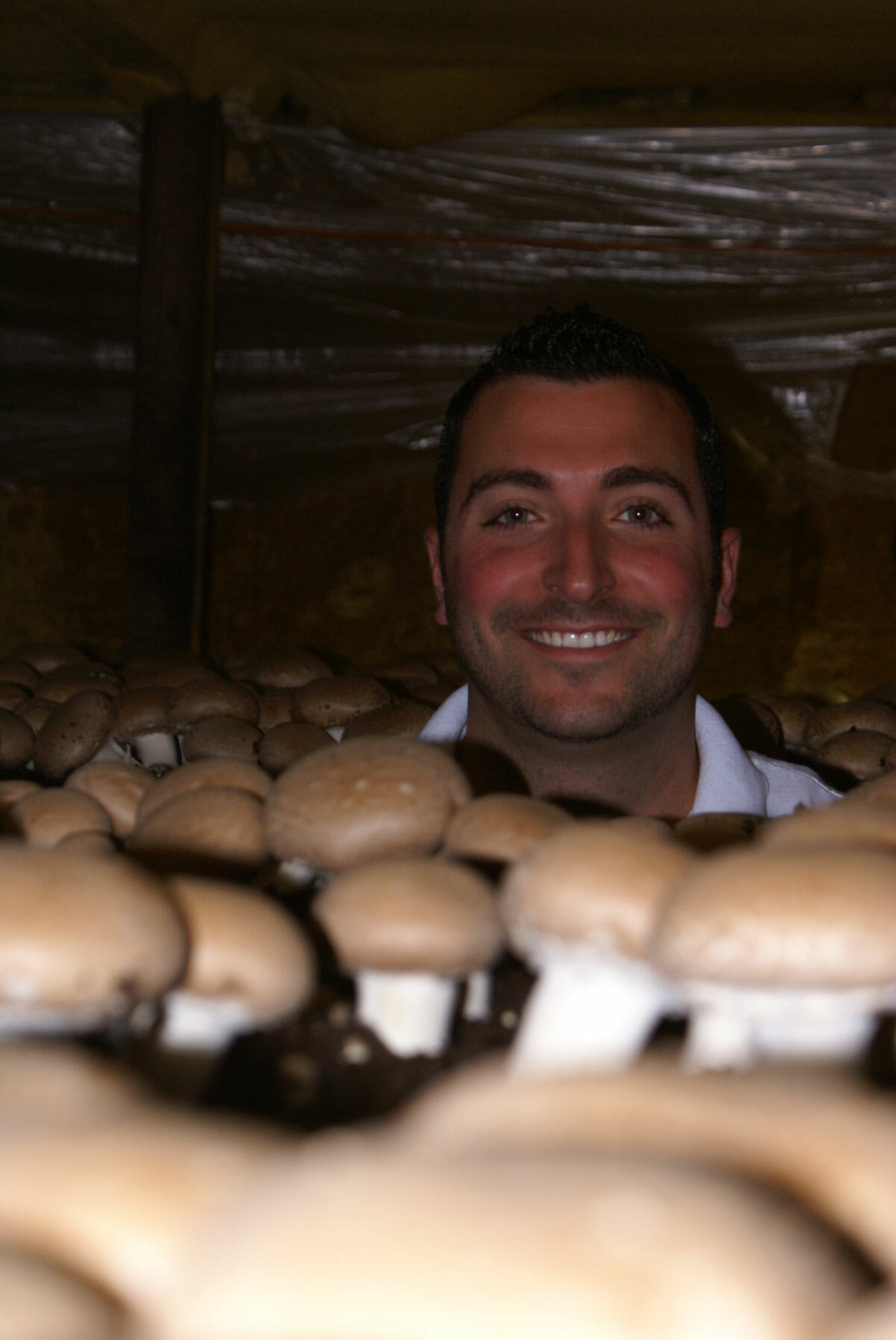 Grower Charles Cardile in mushroom house with criminis.
