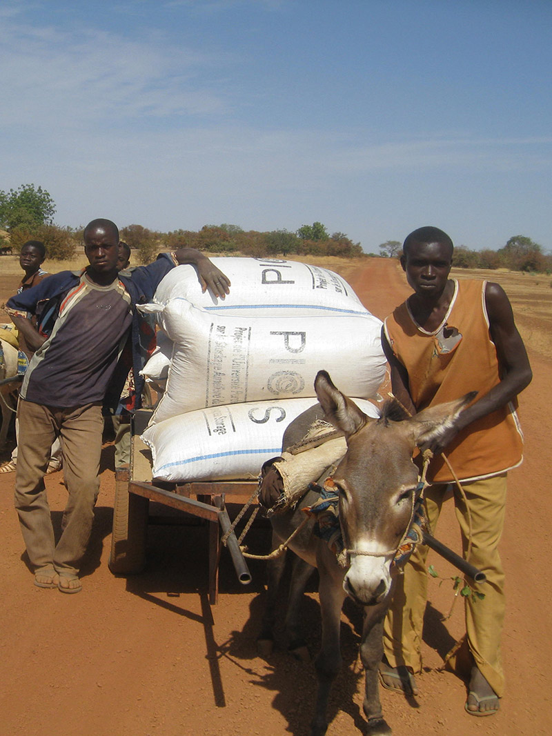 Burkinabe farmers transport a load of PICS bags to market.