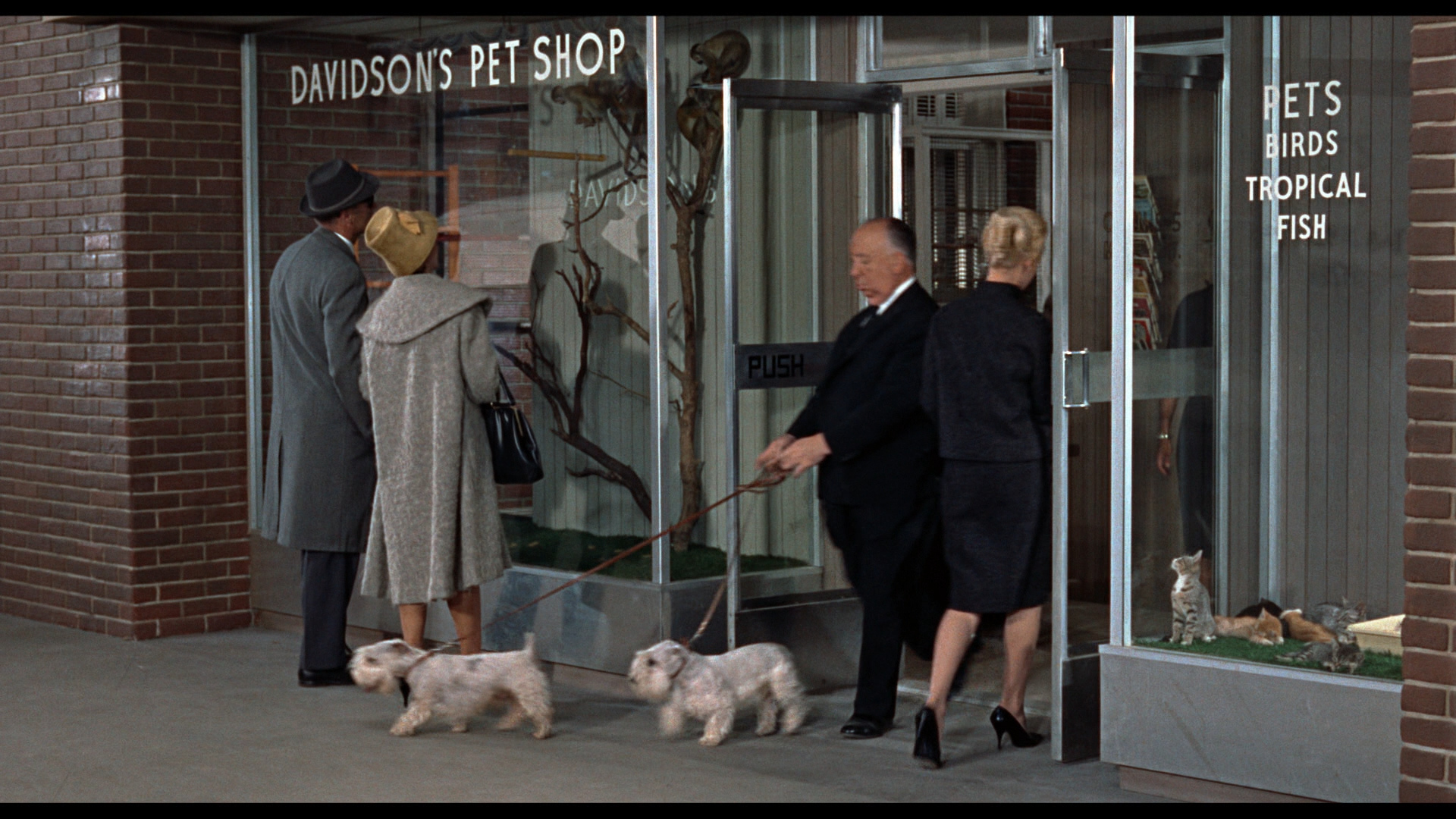Alfred Hitchcock strolls through an opening scene of 'The Birds' with his Sealyham terriers.