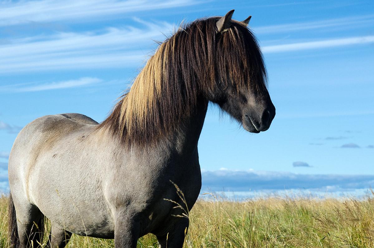 You're a Horse - Modern Farmer Barnyard Animal Quiz